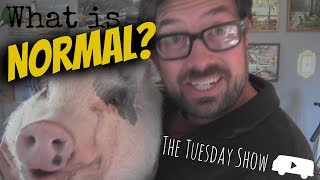 What is Normal? - The Tuesday Show