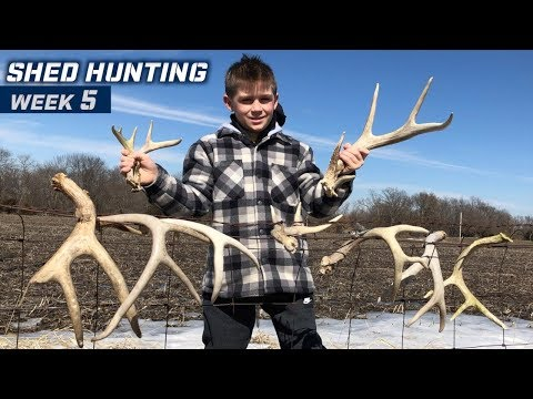 Shed Hunting 2019 Week 5   MARCH MADNESS