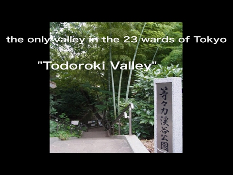 """The only valley in the 23 wards of Tokyo""""Todoroki Valley"""""""