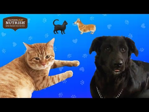 Couples Foster A Dog And A Cat At The Same Time // Presented by Nutrish
