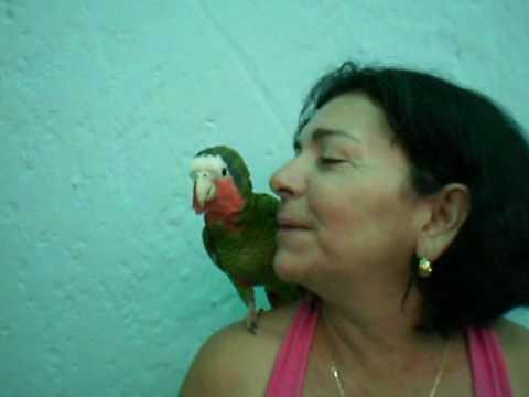 Casa Adelaida y Miguel Cienfuegos Cuba