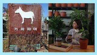 [고양여행] 우리나라에도 커피나무가 있네요? #커피파머…