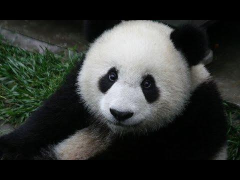 5 Unique Asian Wildlife Animals