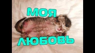 НАШ КОТЁНОК БЕЗ ЛАПКИ | СЛАДУН | что случилось с котёнком девочкой?