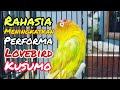 Rahasia Untuk Meningkatkan Performa Lovebird Kusumo Kicau Q Omkicau(.mp3 .mp4) Mp3 - Mp4 Download