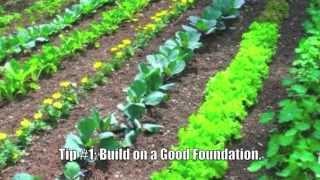 Gardening Tips: Ten Steps to Gardening Success