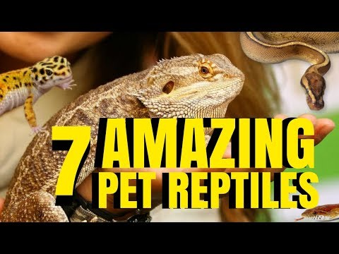7 AMAZING PETS [REPTILES] TO OWN! PROS VS CONS! SnakeBytesTV
