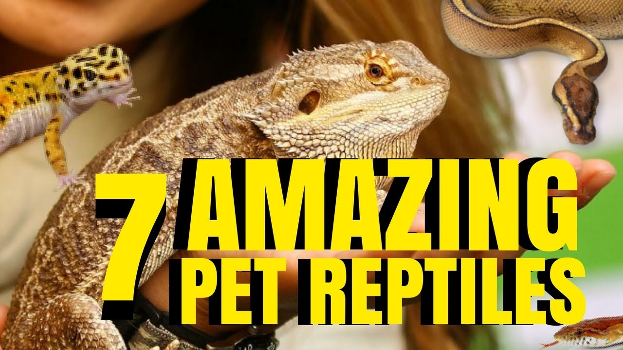 lizards as pets pros and cons
