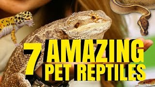 7 AMAZING PETS [REPTILES] TO OWN! PROS VS CONS! SnakeBytesTV