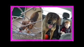 | Dog Rescue StoriesWoman Heads To The Shelter To Adopt A Cat, Brings Home A Dog Instead