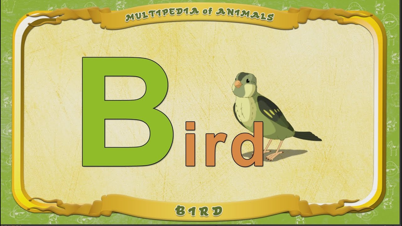 bird with 3 letters multipedia of animals letter b bird 20614 | maxresdefault
