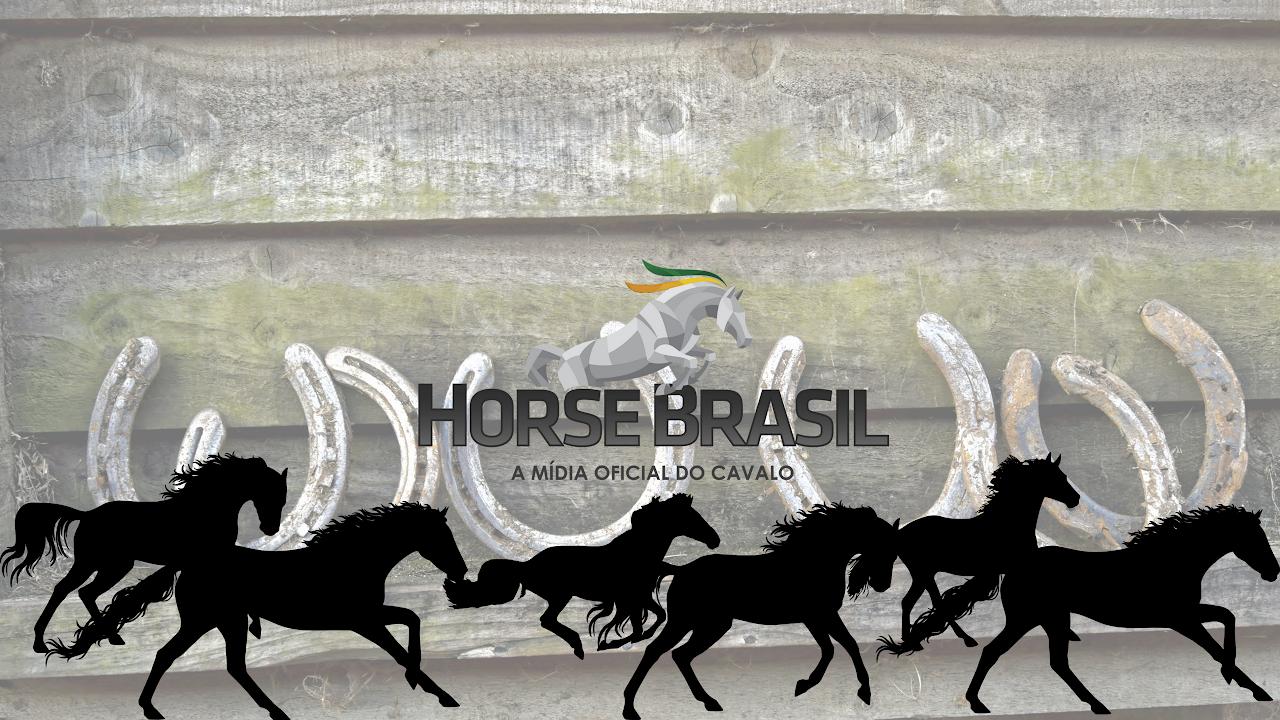 Resultado de imagem para Horse Brasil Channel