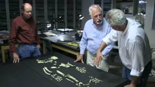 The Evolution of Bipedalism — HHMI BioInteractive Video