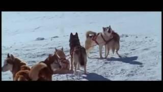 8 amici da salvare - Trailer