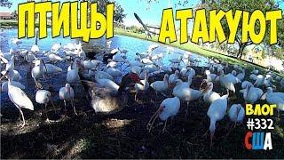 Птицы атакуют, когда гулял с ребенком. Выходной день в парке с сыном. #332 Алекс Простой