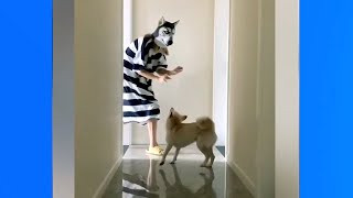 Funniest Dogs | 1001 Reaction when Trolling Dogs | Top Funny Pets