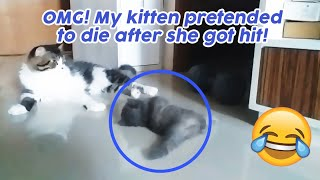 A Cat who Pretends to Die