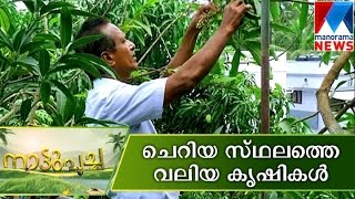 Farming in five cent land | Nattupacha | Manorama News