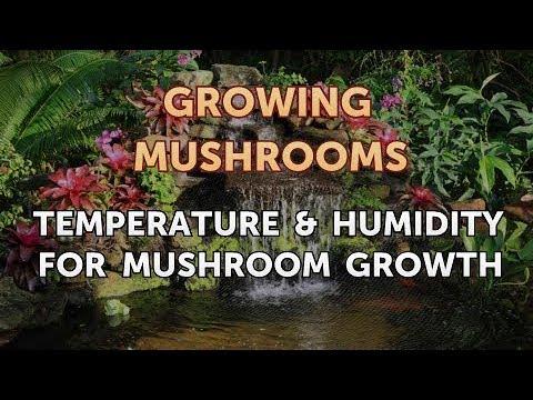 .養殖菌菇環境監測中應用的溫濕度感測器