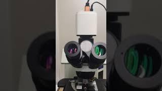 [중고현미경][올림푸스…