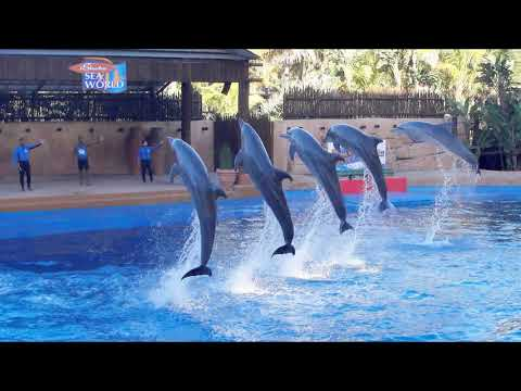 uShaka Marine World & the dolphins of Sea World, Durban