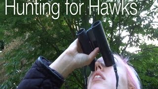 Hunting for Hawks | Shed Science