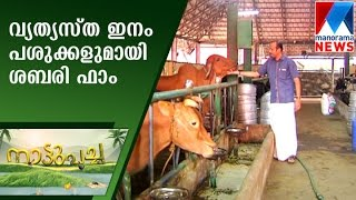 Sabari farm from Panthalam in Nattupacha | Manorama News