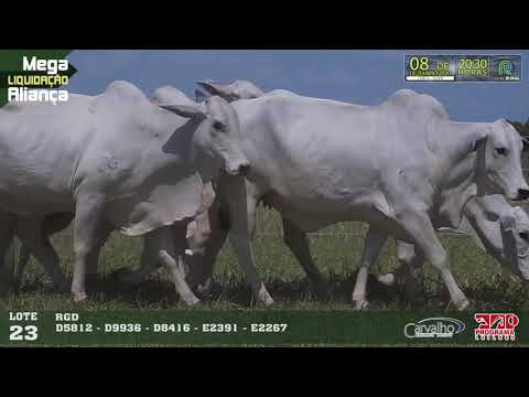 LOTE 023