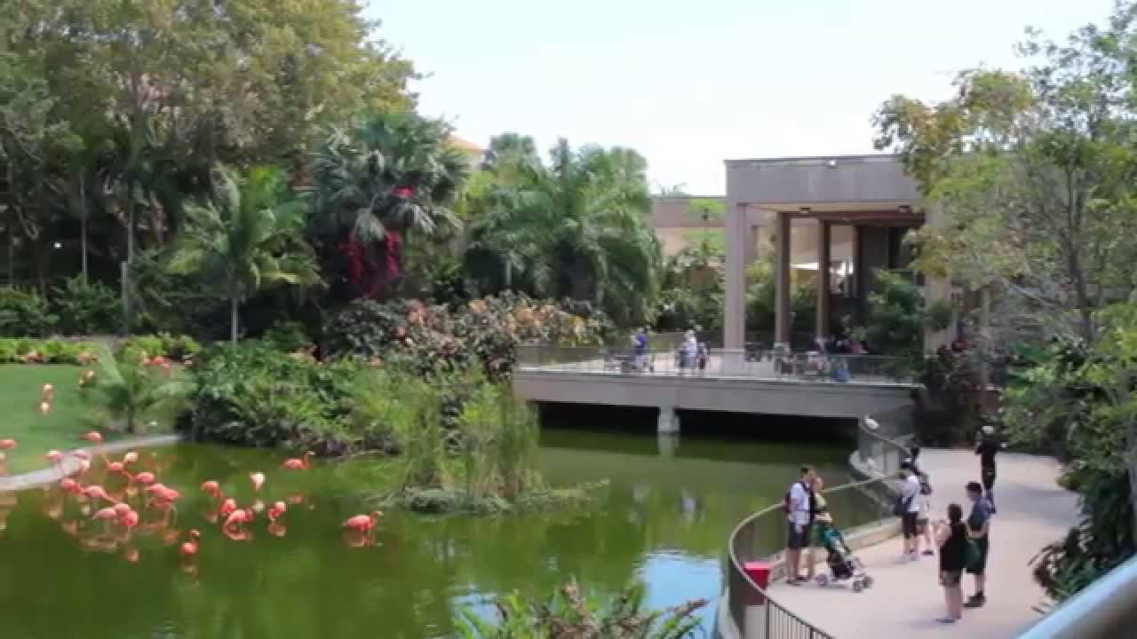 Miami, Florida: Cosas para Hacer en las Vacaciones en Familia - YouTube