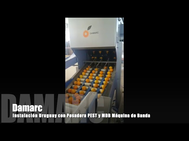 Máquina Pesadora Pest y Máquina de Banda Damarc | Maquinaria Prepacking