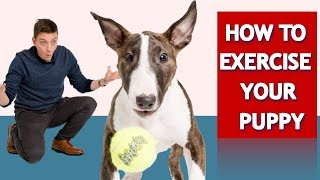 How to Exercise Your Puppy!
