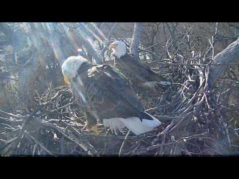 EAGLE CAM 2017 - Liberty & Justice switch egg watch duty- ECC, MPDC - Washington, DC - #EggWatch2017
