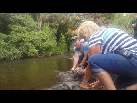 Blackfern Lodge Whio Release 2017