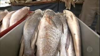 Vírus misterioso provoca queda no consumo de peixes em Salvador (BA)