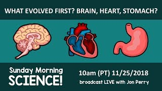 Irreducible Complexity? What organ evolved first: Brain, Heart, Stomach? Sunday Morning Science