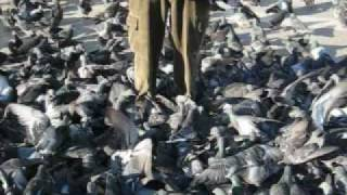 Video Drowning in Pigeons in the Park download MP3, 3GP, MP4, WEBM, AVI, FLV Mei 2018