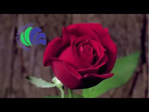 Creation Works - Emirates Flowers - Promotional Video.mov