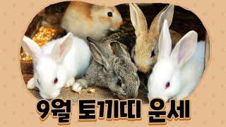 [백련사]신축년 양력 9월 토끼띠 운세!!