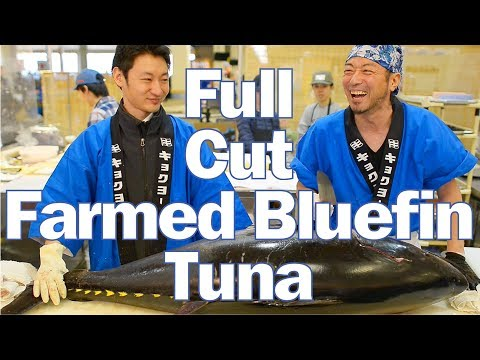 Farm-Raised Bluefin Tuna, Egg To Adult, Sustainable Fish From Japan In USA