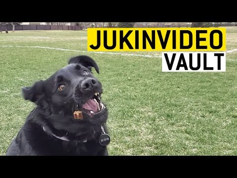 Where my dogs at? || JukinVideo Vault