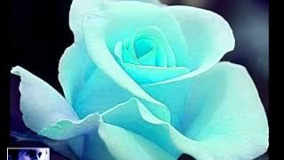 63 Koes Plus   Setangkai Mawar Bunga