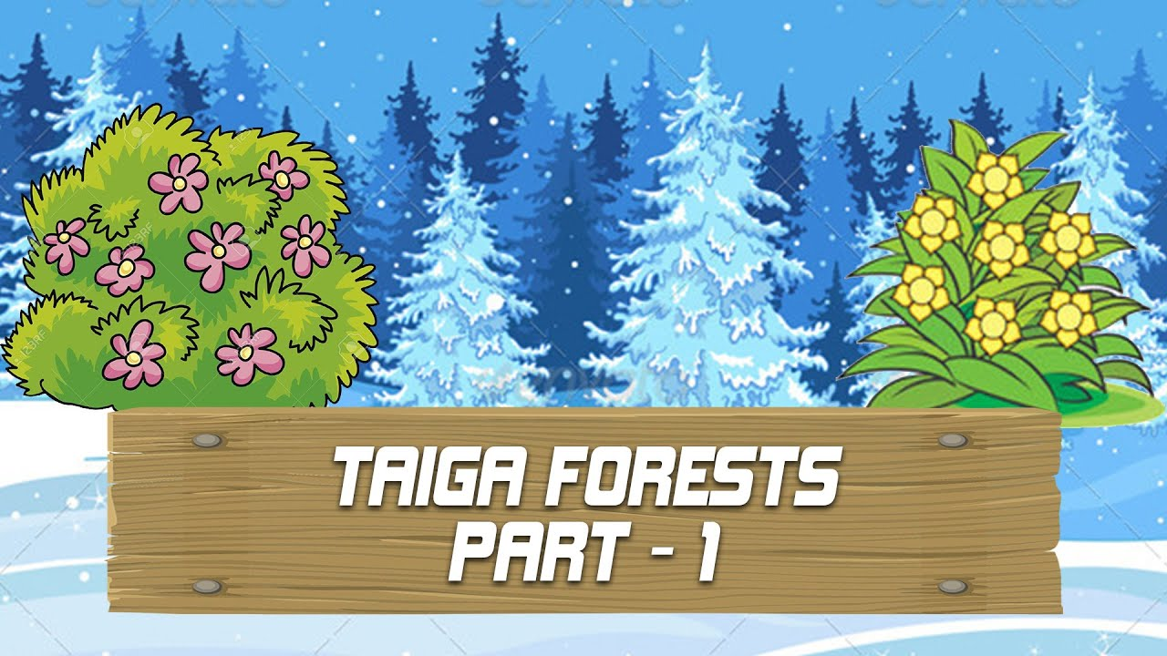 Coniferous Forest Facts For Kids