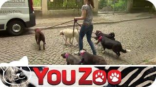 How To: Hundesitting │dogsitting