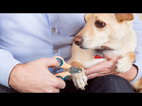 Finally! Faster, safer nail trims for pets.