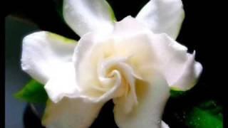 Dos Gardenias - Ibrahim Ferrer