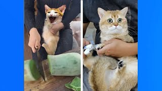 Top Funny Pets | Funny Reaction Stubborn Cats | Funny Videos
