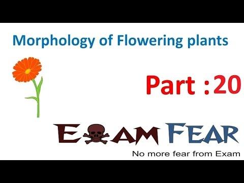 Biology Morphology of Flowering Plants part 20 (Flower Structure) CBSE class 11 XI