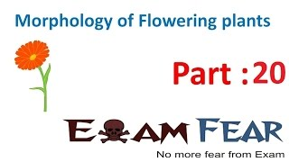 Biology Morphology of Flowering Plants part 20 (Flower Structure) CBSE class 11 XI