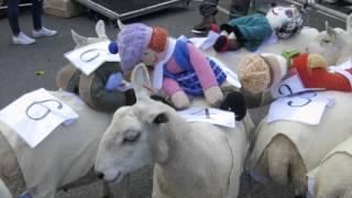 Moffat's 4th annual Sheep Race Twitter: @mickmcgurk https://twitter...