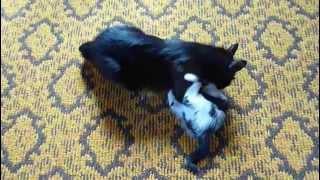 Мама кошка и ребенок котенок